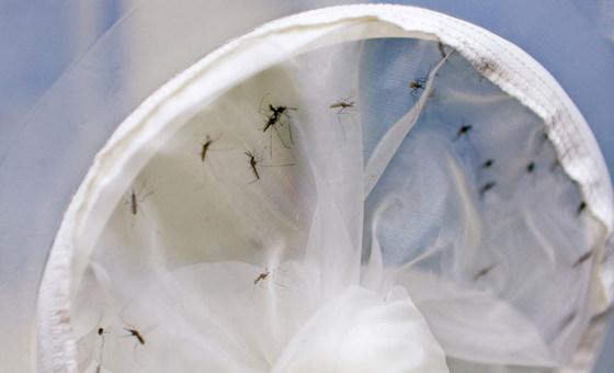 Organismos internacionales registran un nuevo récord de dengue con tres millones de casos en América Latina en 2019