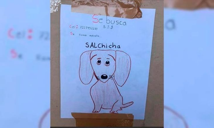 Un nene de 11 años perdió a su mascota: no tiene fotos y la busca con un dibujo
