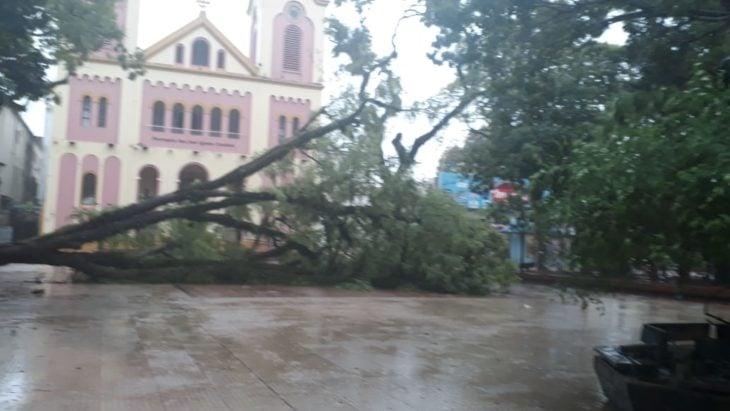 La tormenta provocó caídas de árboles en Posadas
