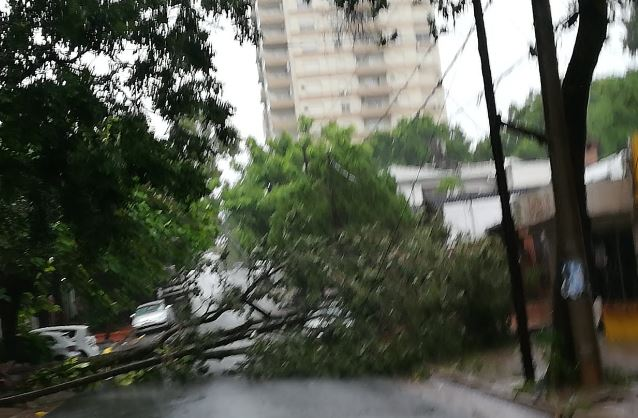 Voladuras de techos, árboles caídos, hasta un auto golpeado, fueron algunos de los daños que dejó el temporal en Posadas