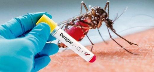 8 de los 75 casos de dengue en Misiones son del serotipo DEN-2