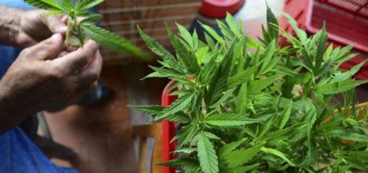 """Operativo en Campo Viera: la jubilada que tenía una planta de marihuana en su casa """"en ningún momento"""" estuvo detenida"""