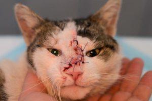 Cáncer en las mascotas: mitos y verdades para prevenir y tratar la enfermedad en animales