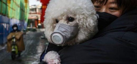 Un perro en cuarentena luego de dar positivo al análisis de coronavirus