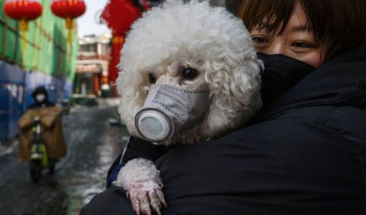 Detectan el primer caso de coronavirus en perros