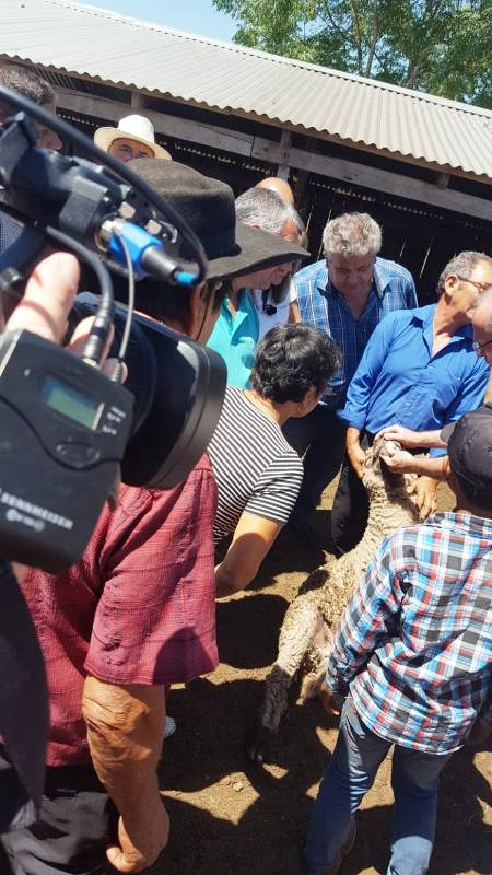 Productores ovinos y caprinos de Misiones se capacitan para mejorar la reproducción y ajustarla a la demanda del mercado