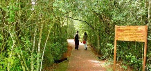 Se habilitó nuevamente el Sendero Verde en el Parque Nacional Iguazú tras el avistamiento de un puma