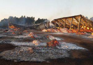 TAEDA SA: estiman pérdidas por más de 10 millones de dólares tras el incendio de la maderera y analizan contención social para 116 trabajadores