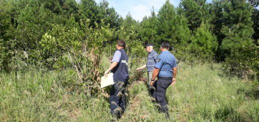 La Policía esclareció un supuesto hurto de yerba mate en Puerto Leoni
