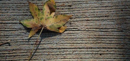 Pasada la medianoche de este jueves, el equinoccio dará comienzo al otoño