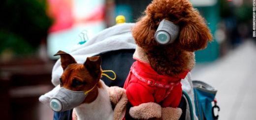 Coronavirus y mascotas: ¿Cómo protegerlas en tiempos de cuarentena?