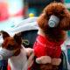 El coronavirus y las mascotas: el mito del contagio y la importancia de conocer las medidas preventivas