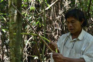 Día Mundial de los Bosques: la historia de Alejandro Benítez, cacique de Pindo Poty, un guardián de la selva en la Reserva Yabotí
