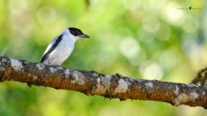 #NosQuedamosEnCasa: para quienes aman las aves, te contamos sobre la expansión de los Tuerésen Misiones