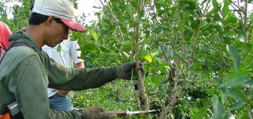 Coronavirus: el ministerio del Agro de Misiones en articulación con Desarrollo Social asistirá a los trabajadores rurales afectados por la cuarentena