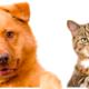 Aseguran que las mascotas son las mejores aliadas para sobrellevar el aislamiento
