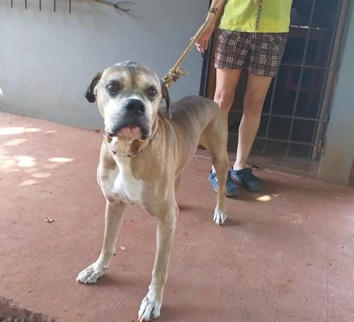 Posadas: tiene cáncer terminal y busca un hogar para su perro