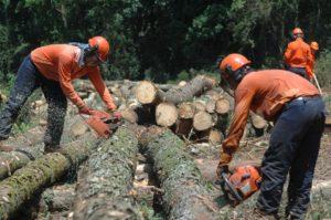 Gobierno argentino incluyó a la cadena foresto-industrial en la ampliación de las actividades y servicios básicos esenciales eximidas en la emergencia sanitaria