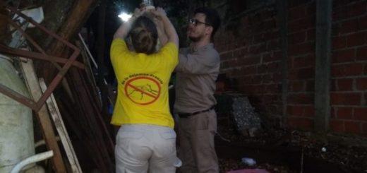 Iguazú: se colocaron trampas para re certificar a Argentina libre de Paludismo