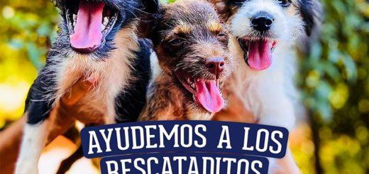 La tienda de animales posadeña Pet Mall invita a colaborar con las mascotas refugiadas