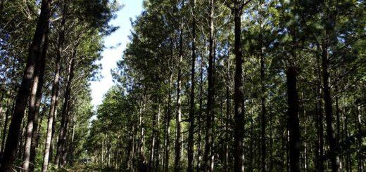 """Para la Federación Argentina de Ingeniería Forestal, la vinculación de la pandemia del COVID-19 con desequilibrios ambientales como la deforestación """"obligará a cambios necesarios para el desarrollo global y local"""""""