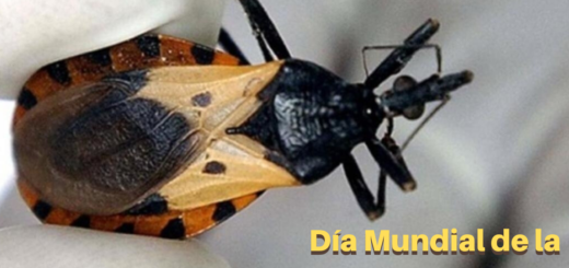 ¿Por qué se celebra hoy, por primera vez, el Día Mundial de la Enfermedad de Chagas?
