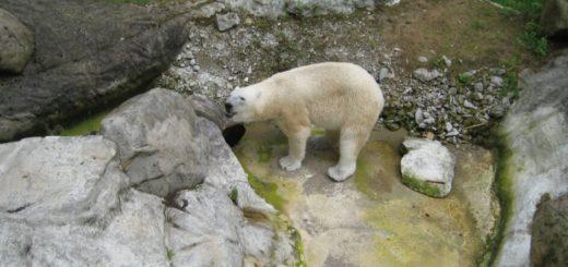 Un zoológico de Alemania evalúa sacrificar algunos animales para alimentar a otros