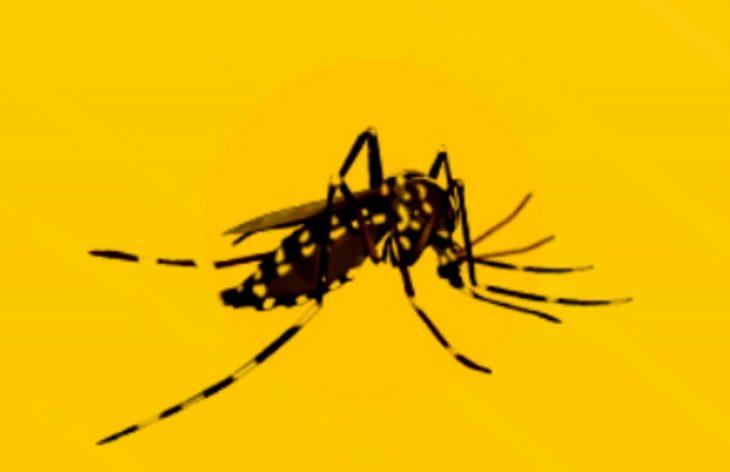 CONICET: científicos proponen aprovechar la cuarentena para eliminar de los hogares los criaderos del mosquito que transmite el dengue