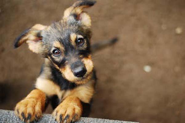 Exitosa campaña de Compras Misiones: seguí colaborando con los animales de El Refugio