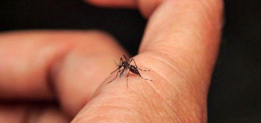 Dengue: el subsecretario de Salud de Misiones aseguró que en el 70% de las llamadas telefónicas por consultas coinciden con el diagnóstico