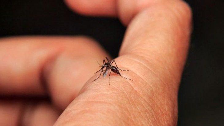 Estiman que debido al cierre de fronteras, los brotes de casos de dengue podrían disminuir