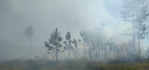 Otro incendio en un malezal afecta ahora a Candelaria