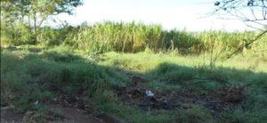 Garupá: Vecinos preocupados por la falta de limpieza  en un terreno que favorece la presencia de mosquitos y sirve de escondite a delincuentes