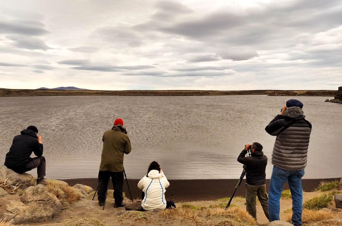 El Macá Tobiano, una especie amenazada por el desarrollo de actividades humanas en la Patagonia argentina