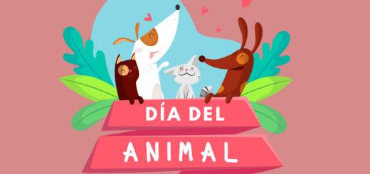 Día del Animal: ¿cómo cuidar a las mascotas durante la cuarentena?