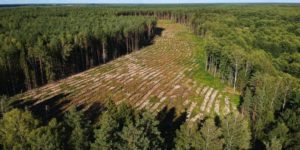 """IPBES sobre COVID-19: """"Necesitamos elegir políticas y acciones globales que protejan la naturaleza, para que la naturaleza pueda ayudar a protegernos"""""""