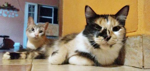 Coronavirus: en el Día del Animal, el veterinario Fernando Tamer brindó recomendaciones sobre el cuidado de las mascotas en cuarentena