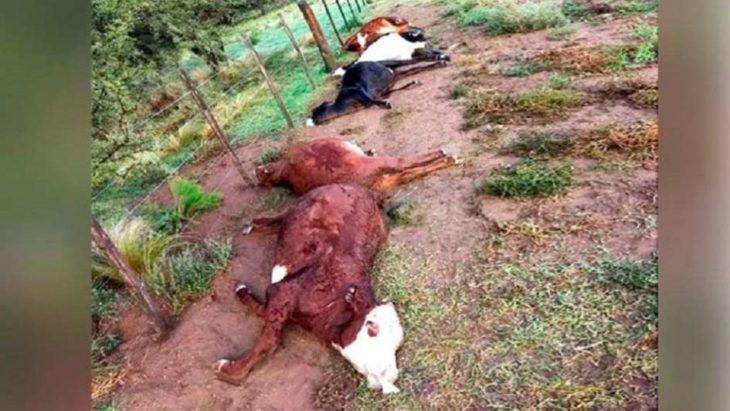 La Pampa: un rayo cayó en un campo y mató a 21 vaquillonas