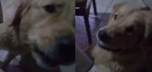 Mirá la divertida escena donde un perro posadeño intenta cantar junto a su dueña