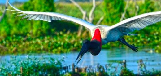 ¿Querés ganarte el libro de Bañado la Estrella, Maravilla Natural Argentina? Participá aquí del Concurso que lanzó Visit 7 Mar para llevártelo