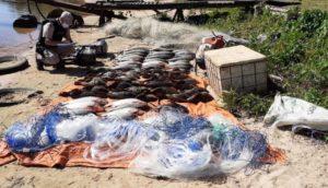 Ituzaingó: Prefectura secuestró más de 600 kilos de pescado y retuvo a tres hombres de nacionalidad paraguaya por depredación en el Río Paraná
