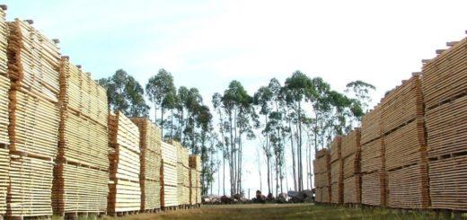 Coronavirus: el sector forestal con expectativas en la reactivación y promoción de la construcción con madera para normalizar el impacto que sufren en el mercado efecto de la pandemia
