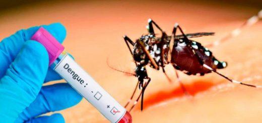 Tucumán enfrenta el brote de dengue más severo de su historia: hay cerca de 2 mil casos en lo que va del año