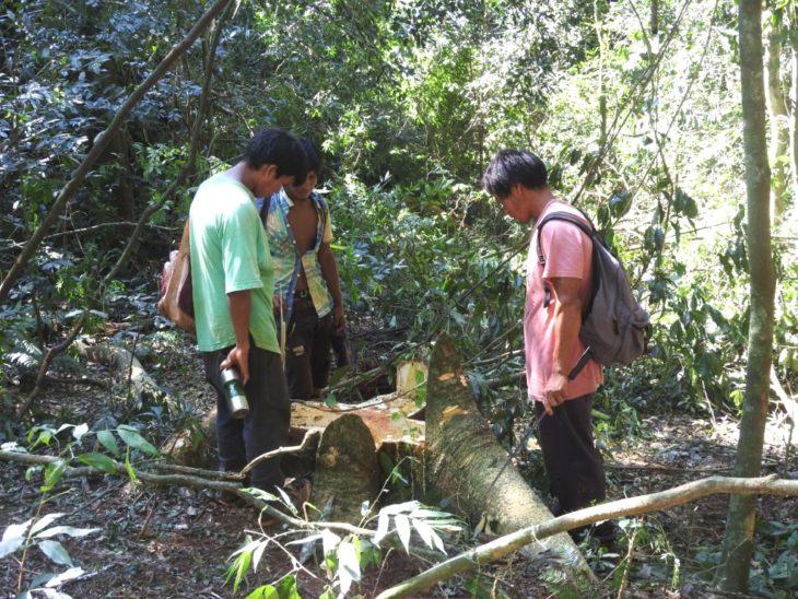 Campo Grande: con autorización de extracción de árboles nativos, Carba SA retomó actividades en territorialidad de comunidades indígenas y se reavivó el conflicto con Tekoa Ka'a Kupe