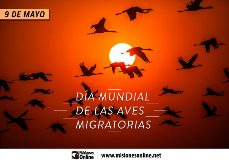 ¿Por qué se celebra hoy el Día Mundial de las Aves Migratorias?