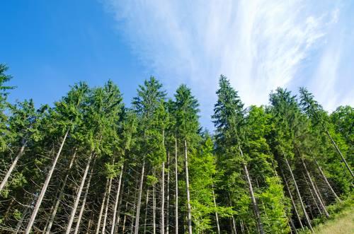 Ley 25.080: Misiones prorrogó el plazo para la presentación de las certificaciones de tareas de bosques cultivados