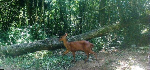 Medio ambiente: la cuarentena no llegó a la selva misionera
