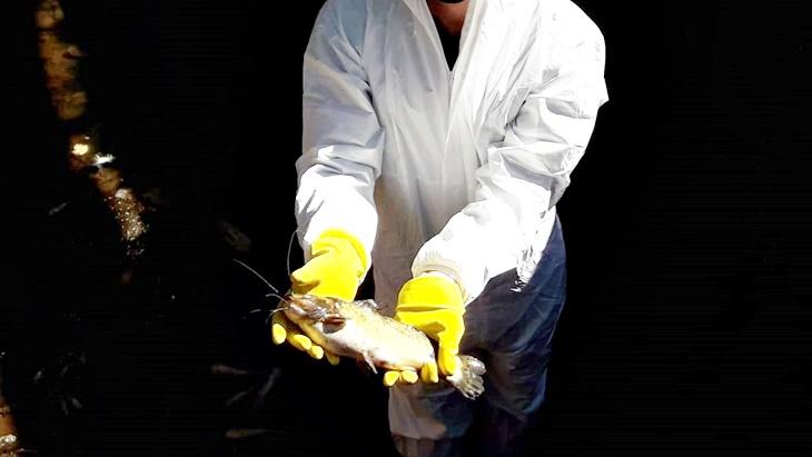 Derrame en el Vicario: retiraron 300 kilos de peces muertos y desde el Ministerio de Ecología aseguran que ya identificaron el domicilio desde donde se produjo la contaminación