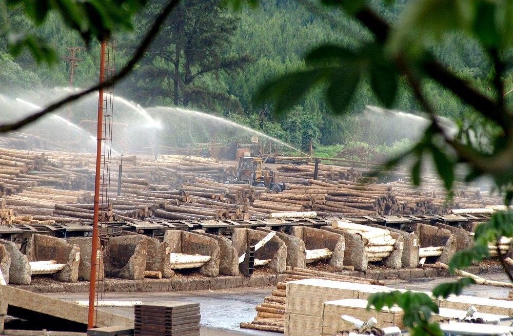 Arauco suspendió por 15 días la compra de rollos de madera a terceros y adelanta parada técnica de la planta de Piray