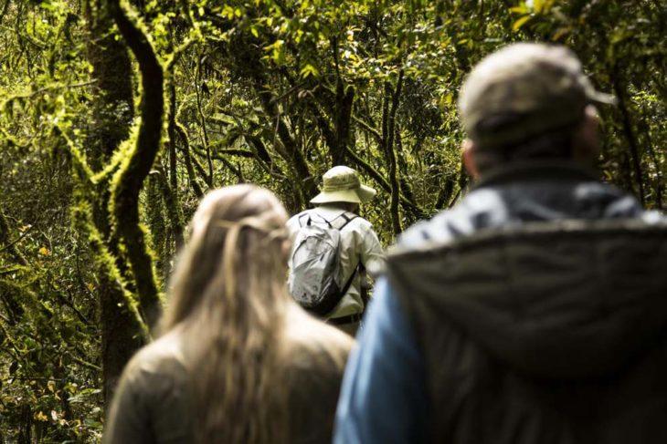 A la Selva Misionera: grandes descuentos por venta anticipada para viajar con fecha abierta después de la cuarentena
